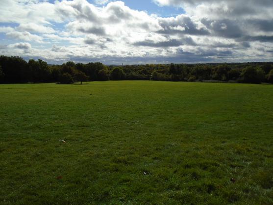 Ipsley Meadow